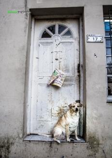 bsas_perro