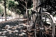 trek_trees